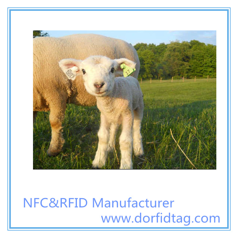 Cattle RFID ear tag temperature monitoring and movement tracking